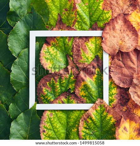 Creative minimal autumn concept. Thanksgiving frame made of green and red autumn leaves. Gradient Fall Flat Lay. Thanksgiving concept Top View
