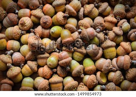 Oak acorns. Oak acorn texture. A lot of oak acorns. Top view from above.  Royalty-Free Stock Photo #1499854973