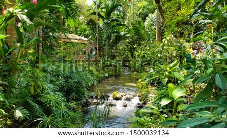 Beautiful, lush, green garden in Konoko Falls, Ocho Rios, Jamiaca. #1500039134