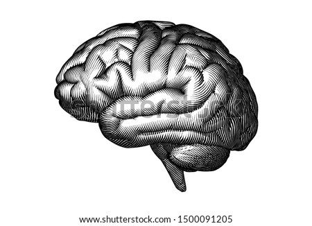 Monochrome engraved vintage drawing human brain in side view with woodcut print style illustration isolated on white background #1500091205