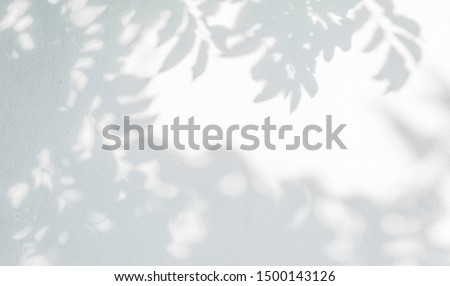 Abstract leaves shadow background, natural leaves tree branch on white concrete wall texture for background and wallpaper, black and white, monochrome,  nature art shadow on wall #1500143126