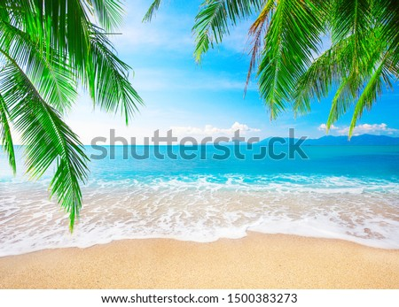 tropical beach with coconut palm #1500383273