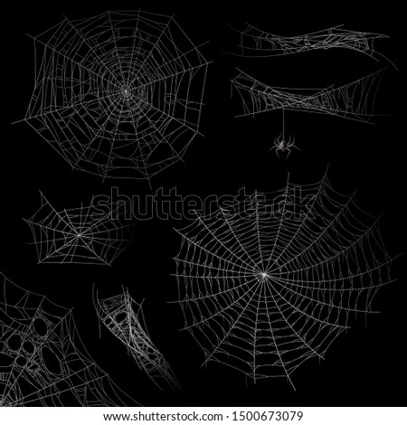 Cobweb. Spider web halloween decor elements, gossamer trap. Spooky fearful and horror silhouettes for tattoo realistic vector transparent dark isolated net set