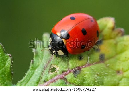 Ladybug on grass macro close up Royalty-Free Stock Photo #1500774227