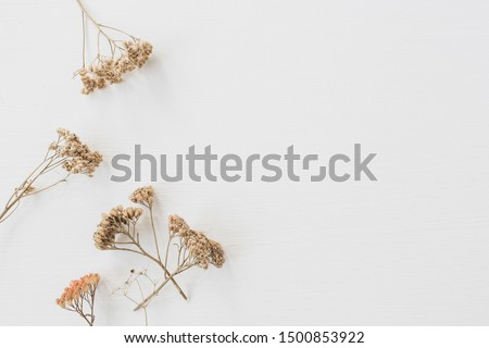 Dry floral branch on white background. Flat lay, top view minimal neutral flower background. Royalty-Free Stock Photo #1500853922