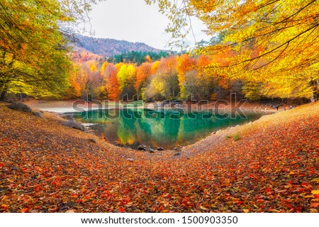 Autumn colors. Autumn time. Colorful fallen leaves in the lake. Magnificent landscape. Yedigoller National Park. Bolu, Istanbul, Turkey. #1500903350