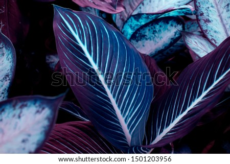 Beautiful leaves pattern background, Natural background and wallpaper #1501203956