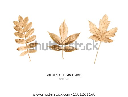 Autumn golden leaves isolated on white background. Flat lay, top view, copy space #1501261160