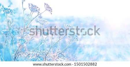 beautiful winter landscape. frozen grass. frosty weather. cold winter season. new year and Christmas holiday concept. copy space #1501502882
