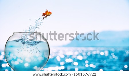 Goldfish leaps out of the aquarium to throw itself into the sea #1501576922