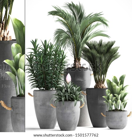 3d illustration of tropical plants on white background #1501577762