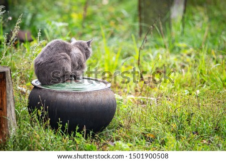 a grey fluffy house cat lies snugly on a clay pot set on the ground in the village garden #1501900508
