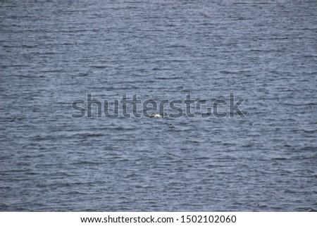 Spring landscape of Lake Tomakomai, Hokkaido, Japan #1502102060