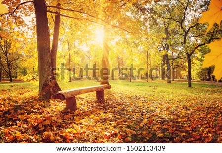trees in the park in autumn on sunny day