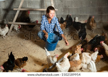Farmer woman feeding chikens in a hen house #1502189954