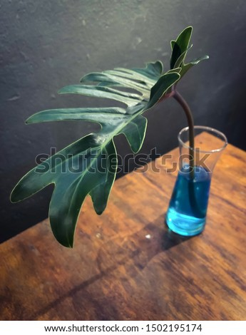 A vase made of philodendron leaves selloum placed on the dining table. #1502195174