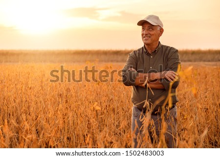 Senior farmer standing in soybean field examining crop at sunset. #1502483003