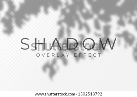Shadow overlay effect. Transparent soft light and shadows from plant branches, leaves and foliage. Mockup of transparent shadow overlay effect and natural lightning. Vector #1502513792