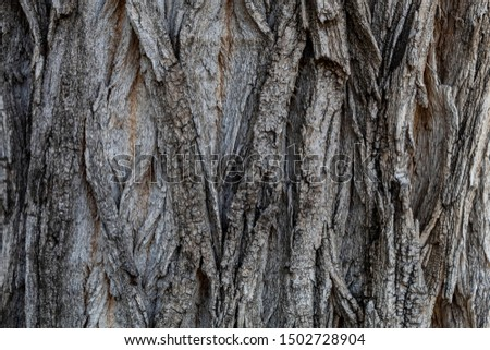 Closeup Tree Bark Texture For Background or Overlay #1502728904