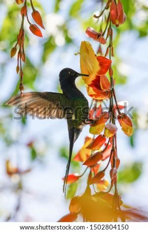 Nature, macro, bugs, hummingbird photos