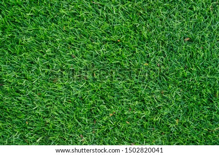 Green grass pattern and texture for background. Close-up #1502820041