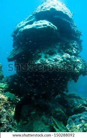Coral reef_ Porites lutea #150288092