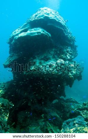 Coral reef_ Porites lutea #150288104