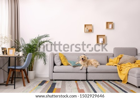 Modern living room interior. Cute Golden Labrador Retriever on couch #1502929646