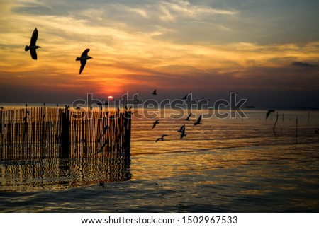 Sunset view with seagul bird #1502967533
