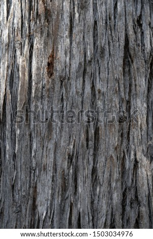Tree bark during the day - Natural Textures #1503034976