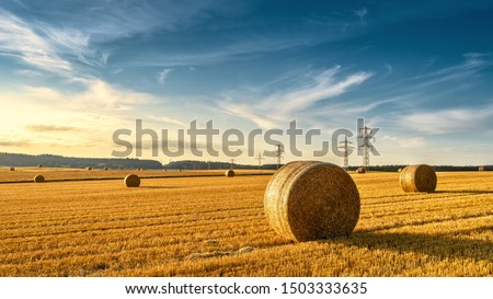 Hay bales on the golden agriculture field. Sunny landscape with round hay bales in summer. Rural scenery of straw stacks at sunset. Panorama of yellow wheat haystacks in countryside. Farm concept. #1503333635