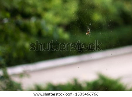 spider on a web on a green background #1503466766