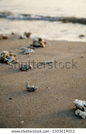 dead coral on the white sand beach. the dead coral reefs shadow at sunset of the sea on the tropical sandy beach. jerman beach bali