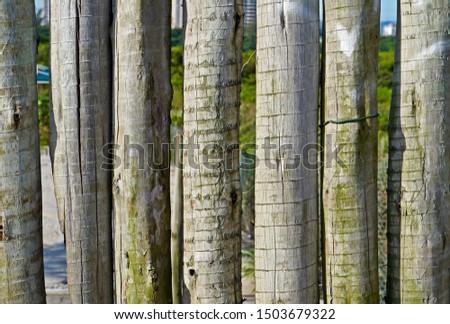 Wooden fence on the beach, Barra da Tijuca, Rio                                #1503679322
