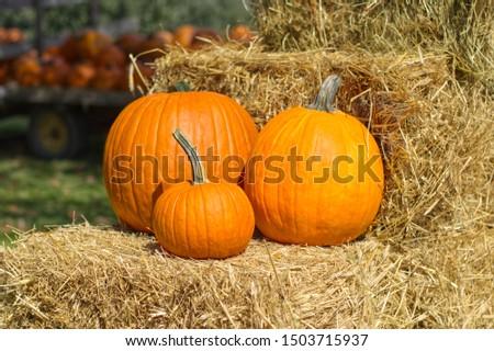 3 pumpkins on hay bales at a farmers market #1503715937