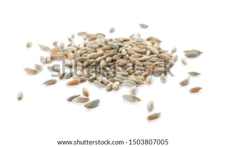 Pile of rye grains on white background. Cereal crop #1503807005