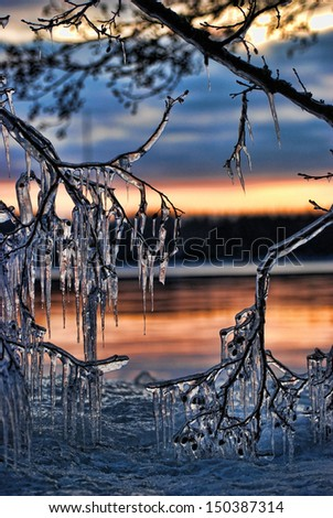 Branches covered with beautiful icicles Royalty-Free Stock Photo #150387314
