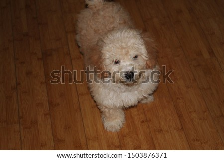 A very playful and playful puppy #1503876371