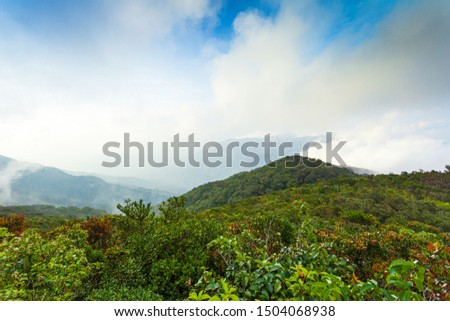 Morning fog in dense tropical rainforest ,Fog, Rainforest, Tree, Tropical Rainforest, Forest,Rainforest jungle aerial view,Treetop, Diminishing Perspective, Forest, Rainforest, Aerial View #1504068938