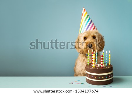 Cute dog with party hat and birthday cake #1504197674