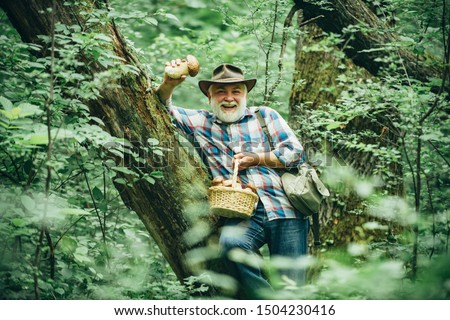 Mushroom in the forest, senior man collecting mushrooms in the forest. Mushroom hunting. Hobbies and leisure #1504230416