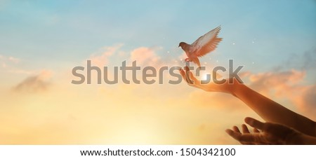 Woman praying and free bird enjoying nature on sunset background, hope concept  Royalty-Free Stock Photo #1504342100