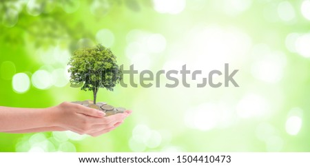 Business Growing Concept : Plant tree growing thru from pile of coins in woman hand with green natural and bokeh light in background. #1504410473