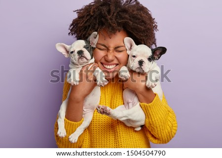 Close up shot of pleased woman with Afro hair holds two puppies, spends leisure time with loyal animal friends, happy to have newborn french bulldog dogs, isolated on purple wall. Animals, people #1504504790