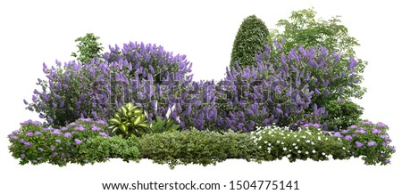 Flower Hedge isolated on white background. Garden design. Lilacs flowers and green plants for landscaping. High quality cutout for professional composition. #1504775141