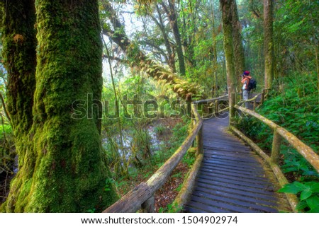 A Photographer taking a picture of beautiful rain forest at ang ka nature trail in doi inthanon national park, Chiang Mai, Thailand