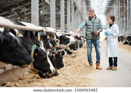 Mature head of large dairy farm with touchpad touching one of cows while consulting with veterinarian by cowshed #1504965485