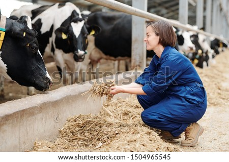 Happy young worker of livestock farm squatting while holding heap of fresh hay in front of milk cows during work #1504965545