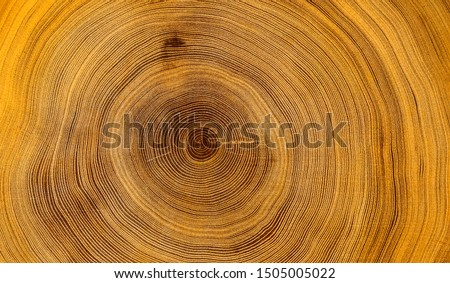 Old wooden oak tree cut surface. Detailed warm dark brown and orange tones of a felled tree trunk or stump. Rough organic texture of tree rings with close up of end grain. Royalty-Free Stock Photo #1505005022