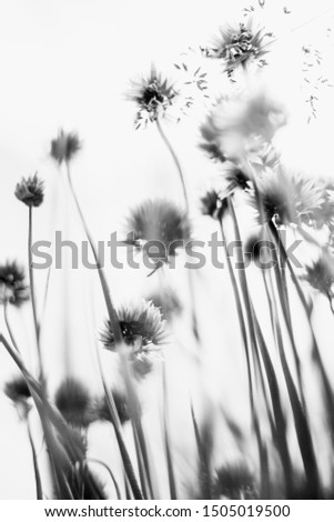 Small flowers shot from beneath on white background